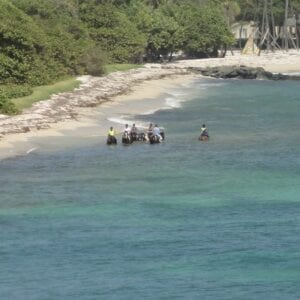 Horses Going for a Swim in L'Ansecoy Bay