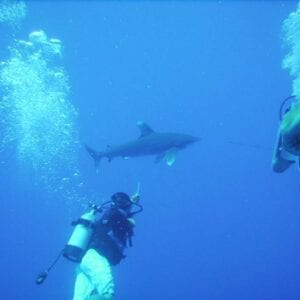 Swimming with a White Tip Shark