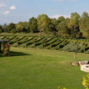 Pagola, Vineyard and Fire Pit